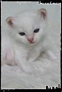 Les bébés de Foxy et Pepper Jack3-3632189